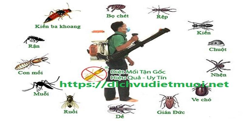 Dịch vụ diệt côn trùng tận gốc Quảng Ngãi