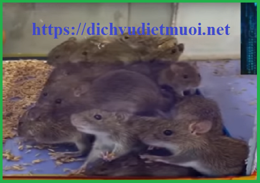 dich-vu-diet-chuot-tai-nha-tphcm
