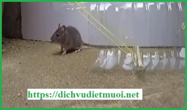 dich-vu-diet-chuot-binh-duong