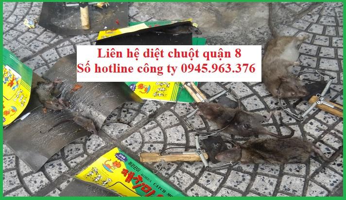 cong-ty-diet-chuot-tai-quan-8