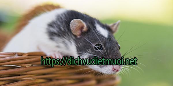 cong-ty-diet-chuot-tai-tinh-binh-phuoc
